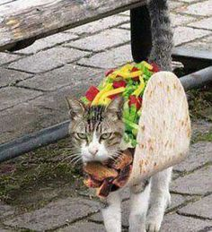 Burrito kat