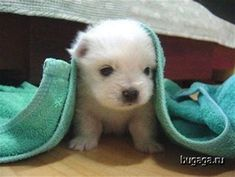 Image result for Animals Funny Baby Picture Ever