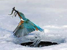 Perfectly Timed Animal Shots | UnMotivating
