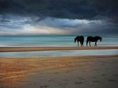 horses on the beach, by Roman Huzar My Horse, Horse Love, Majestic Colonial Punta Cana, Punta Cana Beach, Horses And Dogs, Wild Horses, Black Horses, Zoom Photo, Horse Photos