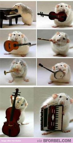 A rat playing musical instruments. That's enough internet for today. A rat playing musical instruments. That's enough internet for today. A rat playing musical instruments. That's enough internet for today. Cute Rats, Cute Hamsters, Funny Rats, Cute Little Animals, Cute Funny Animals, Animal Pictures, Cute Pictures, Beautiful Pictures, Cute Mouse