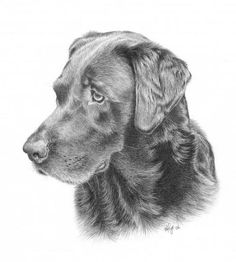 Pics For > Easy Black Lab Drawing | art inspirations in ...