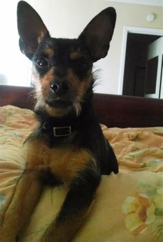 Lost Dog - Terrier - Mesquite, TX, United States 75181