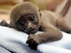 cute-baby-animals-wallpaper-background-720x540