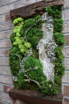 Beautiful Preserved Living Moss framed by two pieces of live edge black walnut. These preserved moss art pieces are a little new to Etsy Shop. These wall art pieces are so natural and very dramatic for any wall. Moss Wall Art, Moss Art, Plant Wall, Plant Decor, Garden Art, Garden Design, Garden Projects, Amazing Gardens, Container Gardening