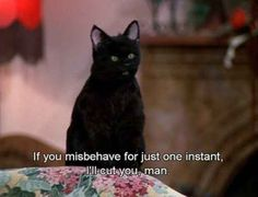 It's time to celebrate one of the greatest cats in TV history: Salem Saberhagen, from Sabrina, the Teenage Witch. Salem was, of course, a human trapped in a Tv Quotes, Movie Quotes, Funny Quotes, Qoutes, Salem Sabrina, Sabrina Cat, Reaction Pictures, Funny Pictures, Salem Cat
