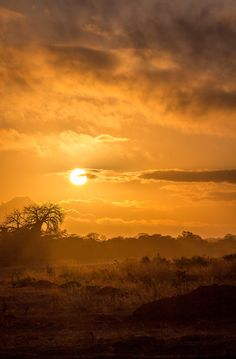 Sunset in the Selous Game Reserve in Tanzania, Africa. To see more images visit www.nicholaspowellphotography.com