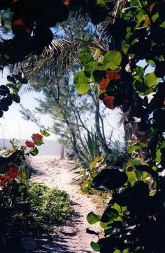 A path to the beach somewhere on Captiva Island... now that's hiking! Visit: http://Tween-Waters.com
