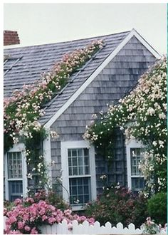 Nantucket roses.  A house is built with walls and beams, a beach house is built with love and dreams!