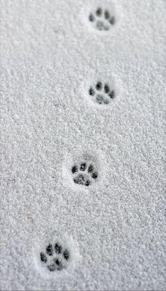 Christmas Phone Wallpaper, Winter Beauty, Christmas Aesthetic, Winter Photography, Christmas Photography, Pet Photography, Cat Walk, Winter Scenes, Winter Time