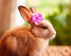Flower girl My Bunnies Are My Models | Bored Panda
