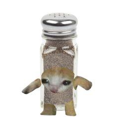 Milanesa, Cats, Random, Memes, Funny, Animals, Food, Gatos, Animales