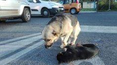 Roma, cane veglia per ore l'amico a quattro zampe investito in strada - TUTTO ANIMALI..GNOMI..NATURA..AMICI