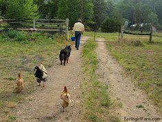 Farm version of the pied piper by Farmgirl Susan, via Flickr
