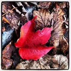 Autum leaf Autum Leaves, Norway, My Photos, Food, Essen, Meals, Yemek, Eten