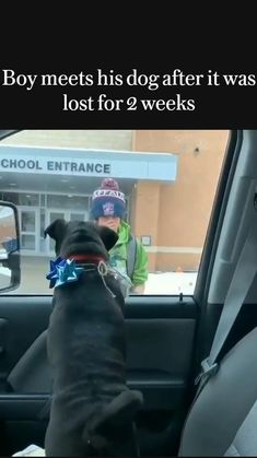 Cute Funny Dogs, Cute Funny Animals, Funny Animal Jokes, Cute Dogs And Puppies, Baby Dogs, Doggies, Cute Animal Videos, Cute Animal Pictures, Cute Stories