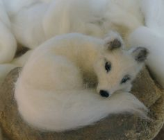 Nap time-- this Arctic fox has a built-in fluffy pillow-- his tail.