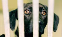 'Recession's silent victims': More than 100 pets are being abandoned every day in Britain as families can no longer afford to feed them