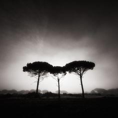 Three Trees In The Fog, photography by Juan Marín Gómez