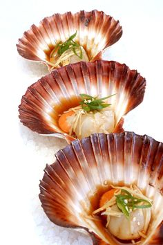 Scallops in shells or use for other appetizers
