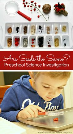 Are Seeds the Same Preschool Science Investigation. Spring science activity for preschool and kindergarten. Seeds Preschool, Preschool Garden, Preschool Lessons, Preschool Crafts, Seed Activities For Preschool, Science Lessons, Fall Preschool, Preschool Classroom, Montessori Science