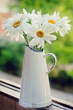 Ah daisies and jugs my two weaknesses