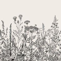 Вектор бесшовные цветочные границу. Травы и дикие цветы. Ботанический Иллюстрация гравировки стиль. Черное и белое