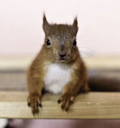 Red Squirrel Orphans!    #baby #animal #cute #squirrel