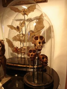 Bat skeletons and monkeys skulls globes. France S. XIX