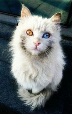 Amazing cat