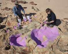 The Largest Ever Dinosaur Footprints Have Been Found In Australia