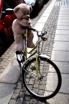 Teddy on bike - Dresden