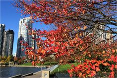 Making the Most of Vancouver's Sunny Fall Days – Social in the City Autumn Day, Fall, Rainy Season, Vancouver, Sunnies, Things To Do, Colours, River, Seasons