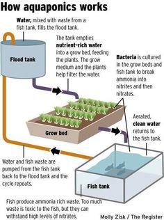 aquaponics diy www.generalhydrop...