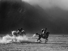 Racing in Savanna