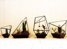 Geometric Terrariums from Assembly New York — ACCESSORIES -- Better Living Through Design