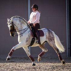 Cute Horses, Pretty Horses, Horse Love, Beautiful Horses, Horse Photos, Horse Pictures, Arte Equina, Andalusian Horse, Friesian Horse