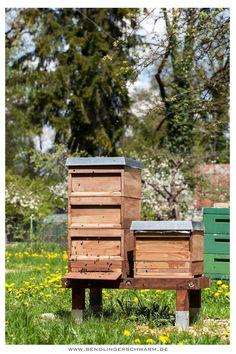 Sendlinger Schwarm: Bienenstand in München