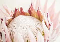 Protea Wall Art Blush Pink Protea Printable Protea
