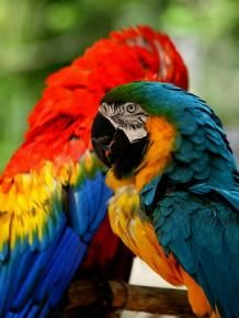Plant World Nursery Macaws