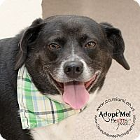 Adopt A Pet :: Max - Troy, OH