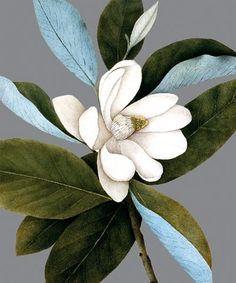 Magnolia - Natural History Museum greeting card