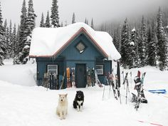 Winter hut with skis, snow poles and dogs. Our photographs are FREE and you can use them for web sites, mobile apps, image Placeholders, all private or commercial works etc. If you have any questions, write to info@freephotodb.com.