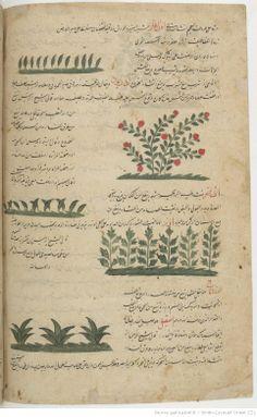 القزويني ، عجائب المخلوقات وغرائب الموجودات Herbal page from a Persian astronomical and scientific manuscript