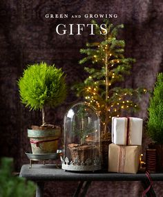 Give the gift of the brightly fragrant lemon cypress plant, ready for display in a rustic bark pot.- A terrain exclusive- Lemon cypress plant, soil, p Black Christmas, Outdoor Christmas, Simple Christmas, Christmas Home, Christmas Holidays, Christmas Crafts, Christmas Decorations, Xmas, Holiday Decor