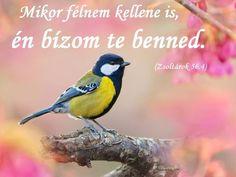 Bizalom - Hit Believe, Prayers, Christian, Prayer, Beans, Christians