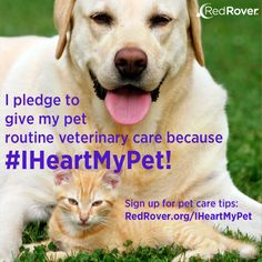 #IHeartMyPet: Pet Care Education Campaign | RedRover