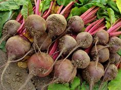 Natural remedy for elevated blood pressure - Beetroot Healthy Weight, Healthy Life, Korn, Beetroot, Blood Pressure, Natural Remedies, Fruit, Vegetables, Blog