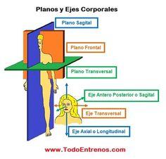 BIOMECANICA 1ª PARTE: PLANOS Y EJES CORPORALES | TodoEntrenos.com