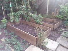 New raised beds.